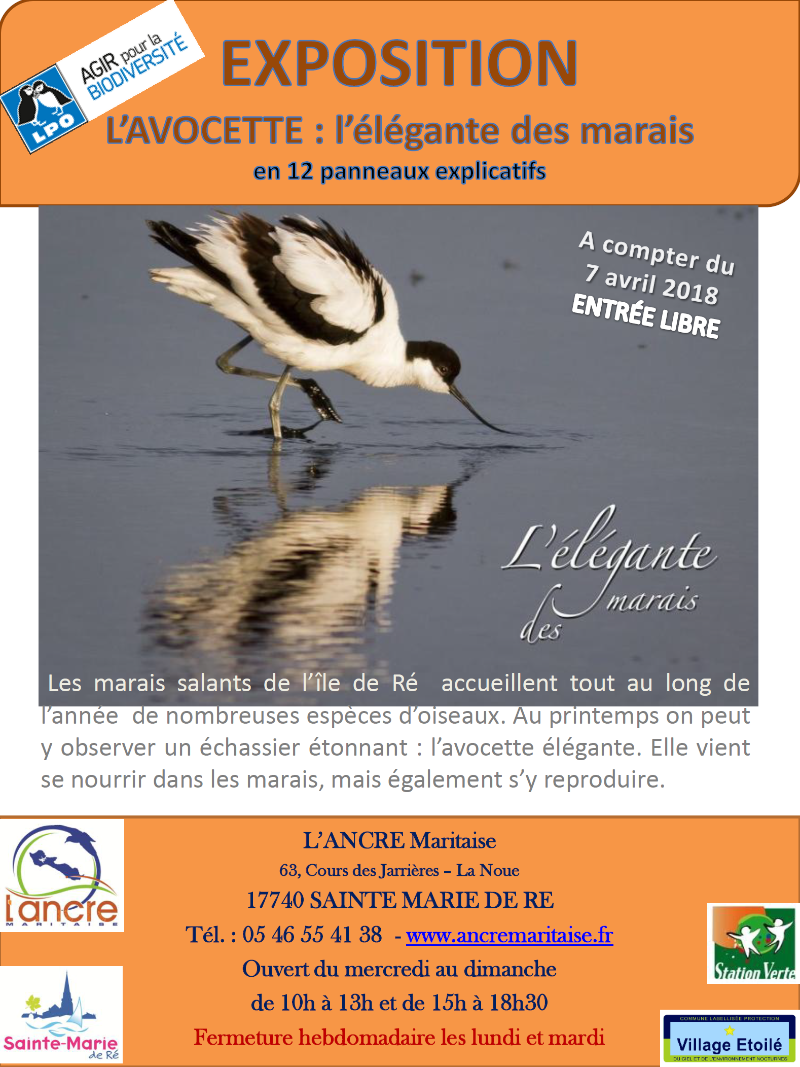 expo avocette ancre